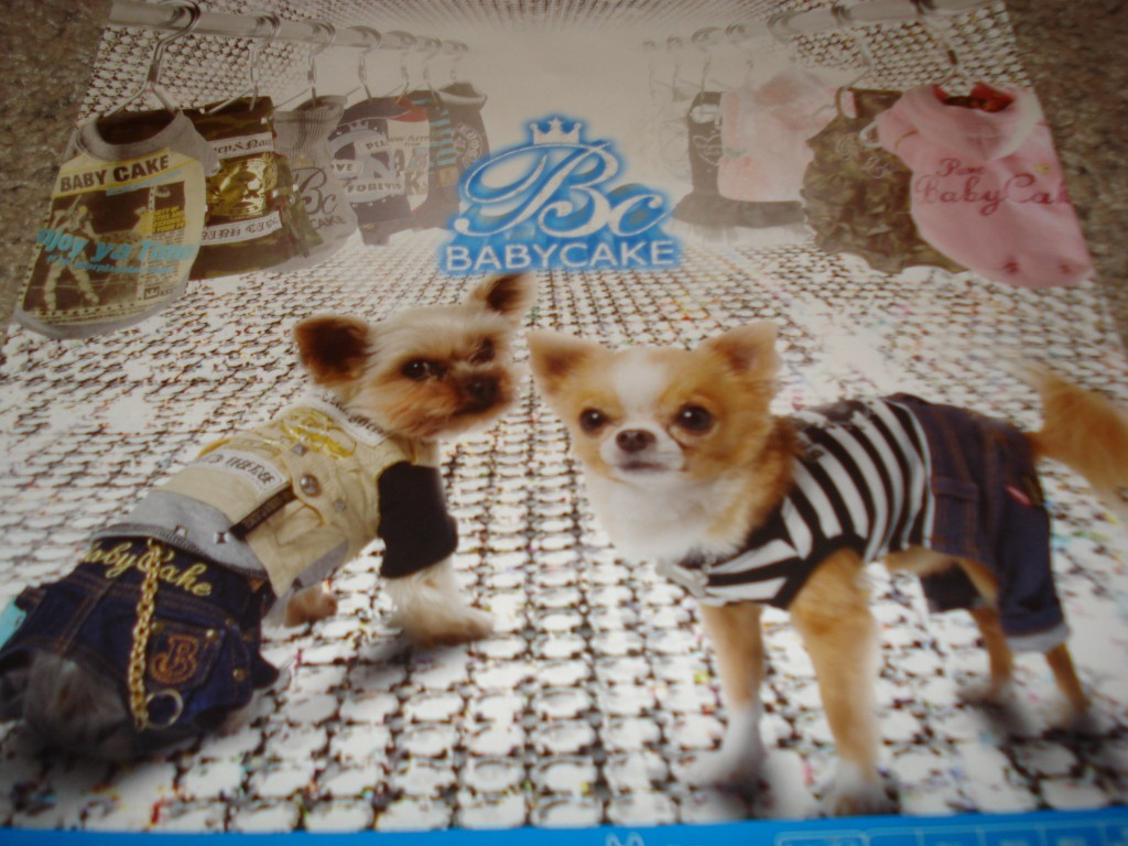 "Nothing says, ""I'm a diligent dog owner,"" like dressing your Chihuahua up in some bling bling!"